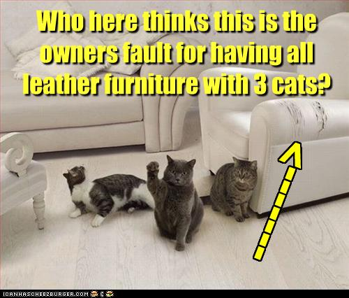 funny-pictures-cats-scratch-your-leather-furniture